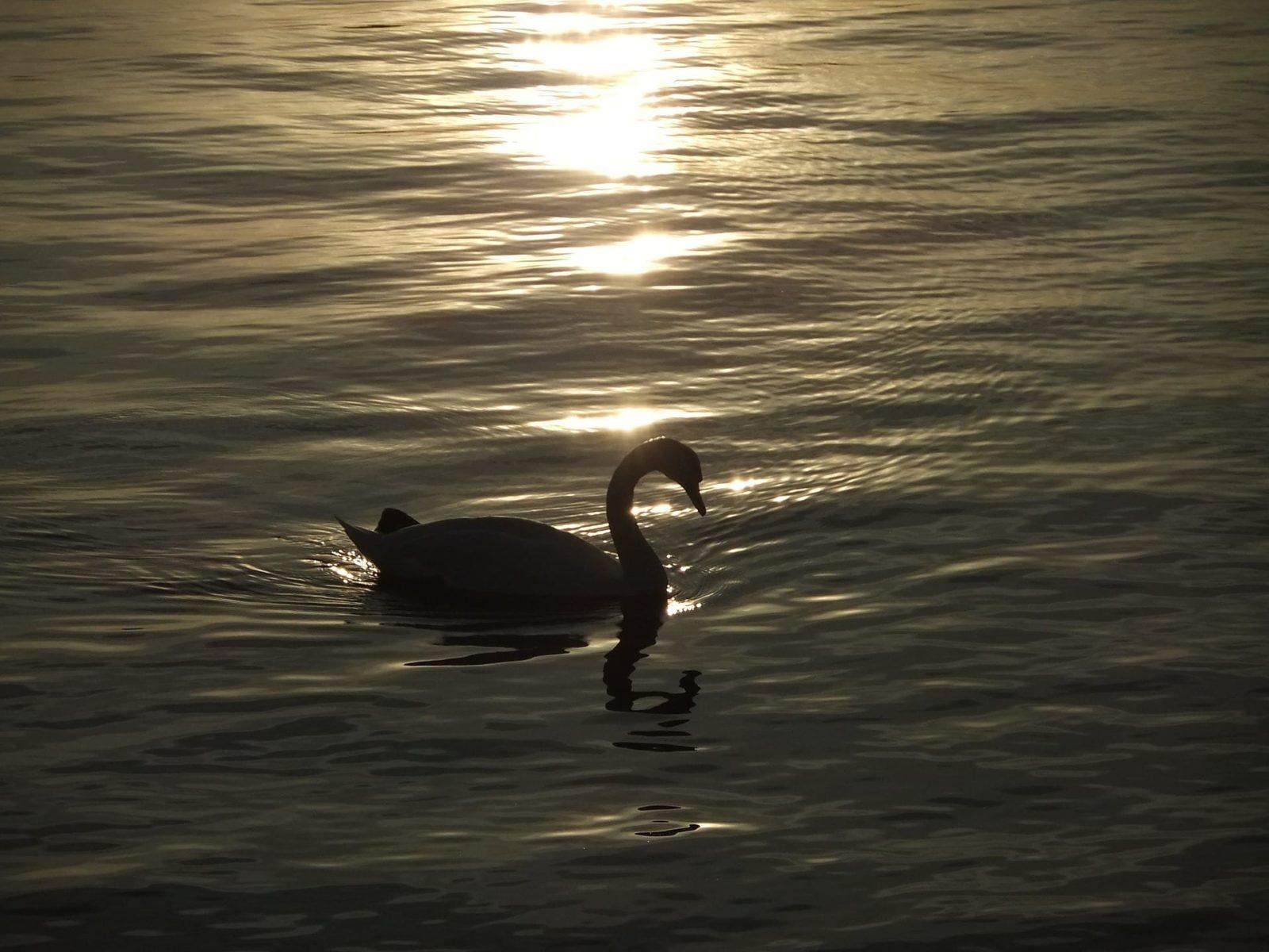 造物能量<醜小鴨還是美麗的白天鵝>