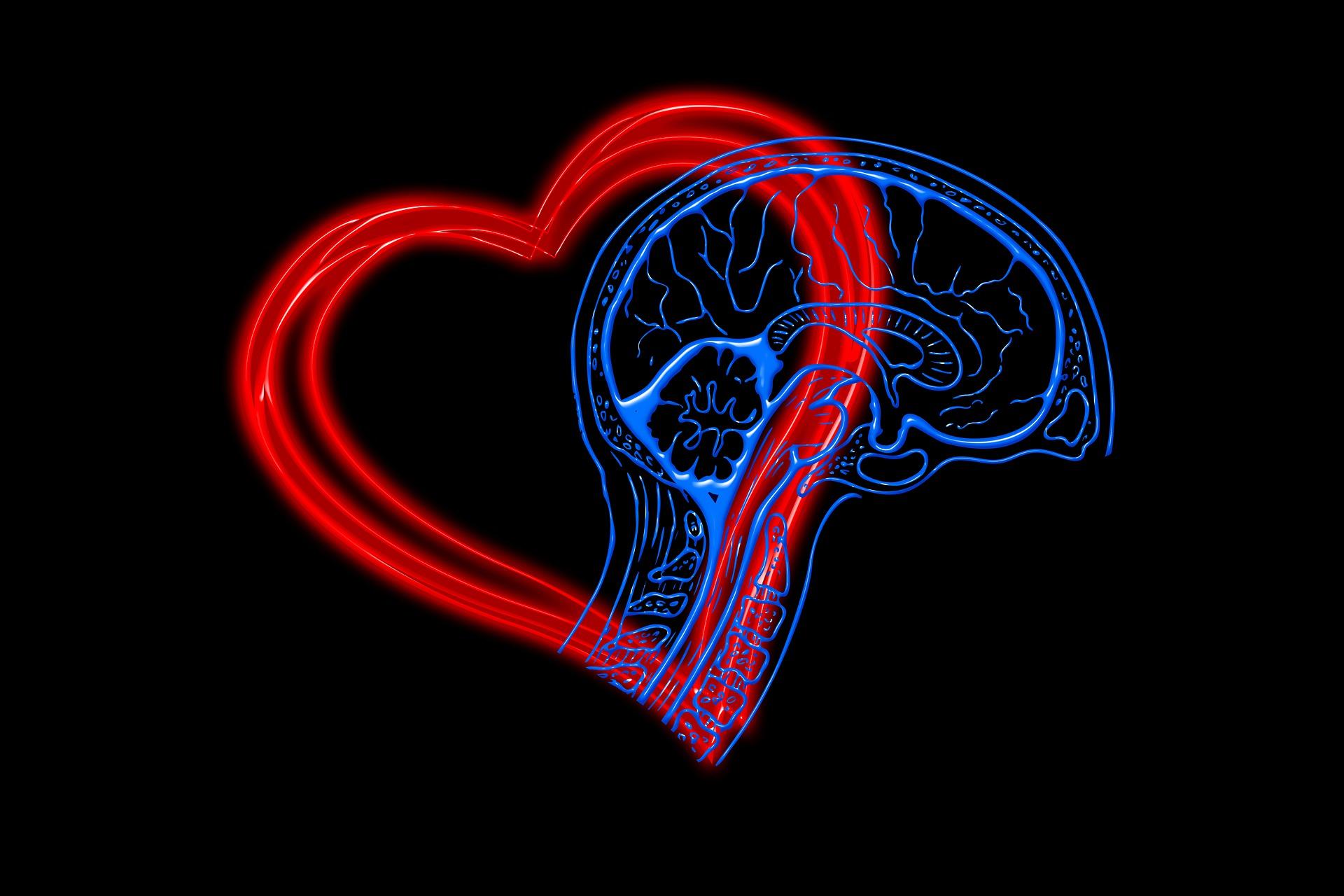 我們要心腦合一,心腦並用缺一不可
