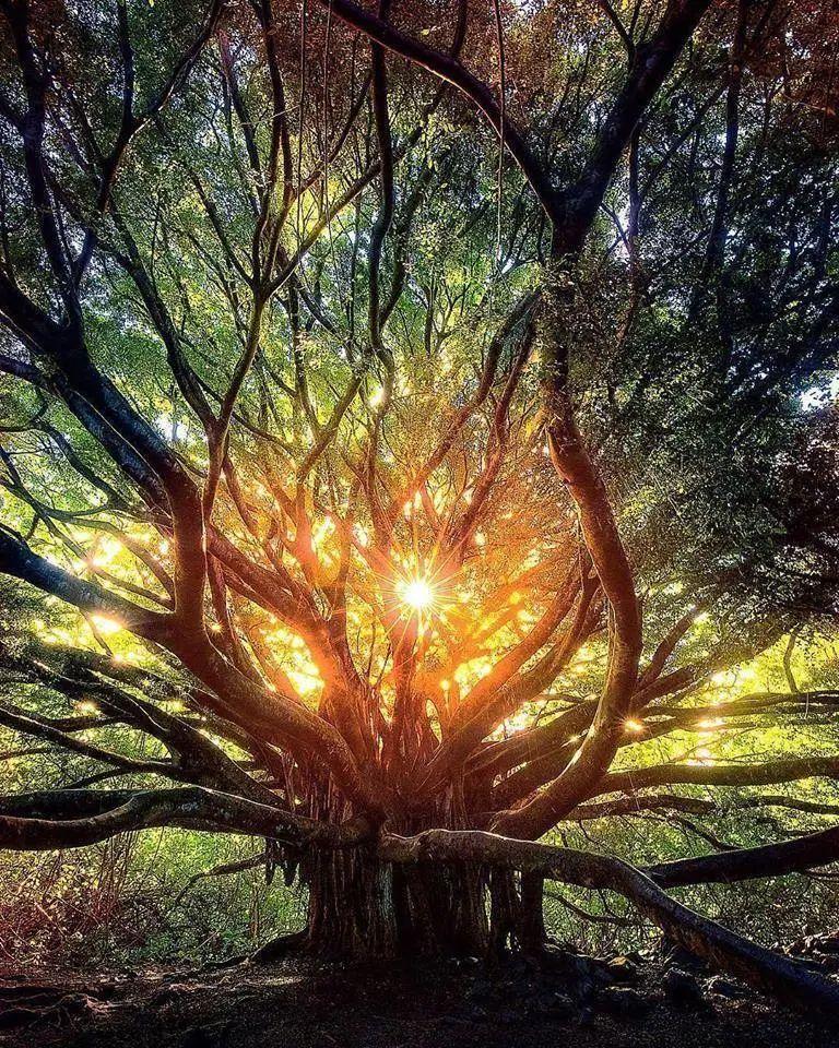古樹精靈<我們是地球上偉大的守護者和天神></noscript>
