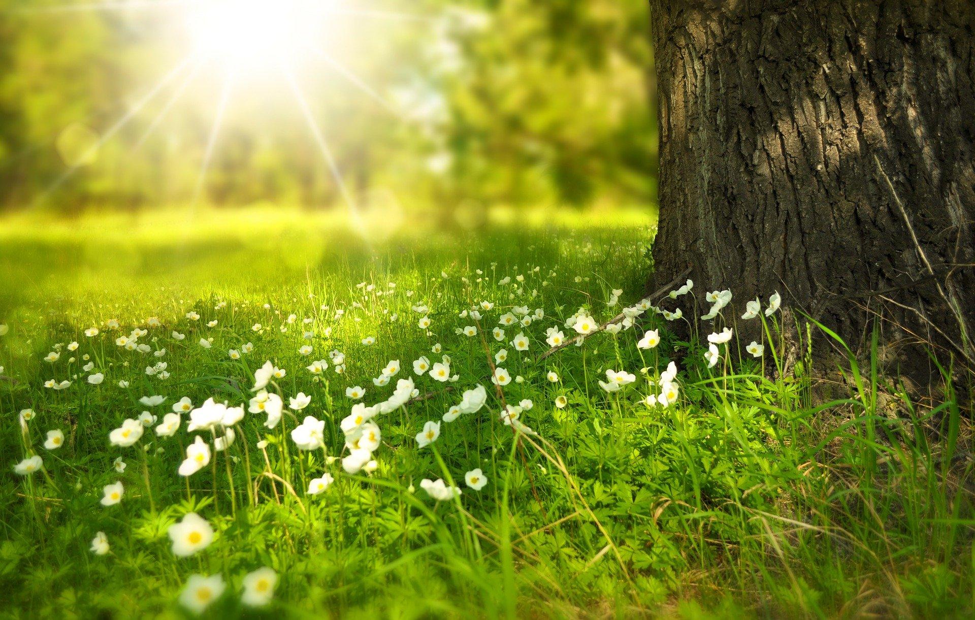 揚升的靈魂,能發送更多的喜悅和幸福的高頻給周遭和世界!