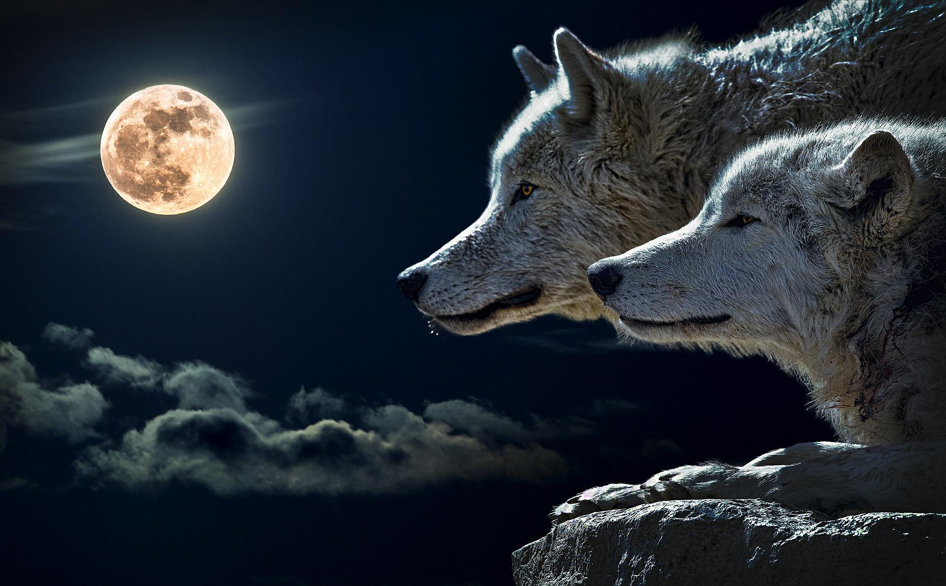 Jenji和白狼族《雙生火焰揚升報告:9:9門戶,黃金時代時間線的高潮點》